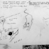 Nadia Nagual's sketches for mice